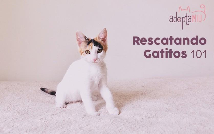 Rescatando Gatitos 101