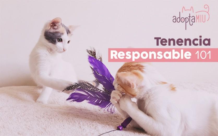 Tenencia Responsable 101